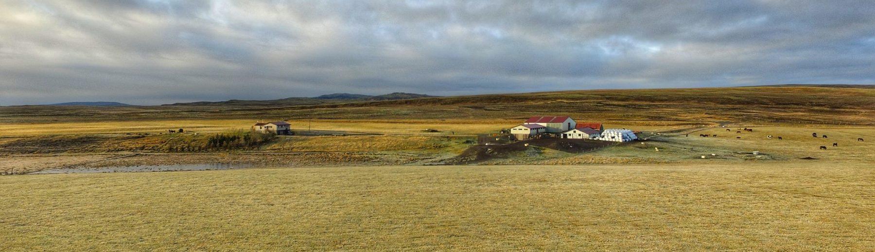 Þóroddsstaðir Hrossarækt
